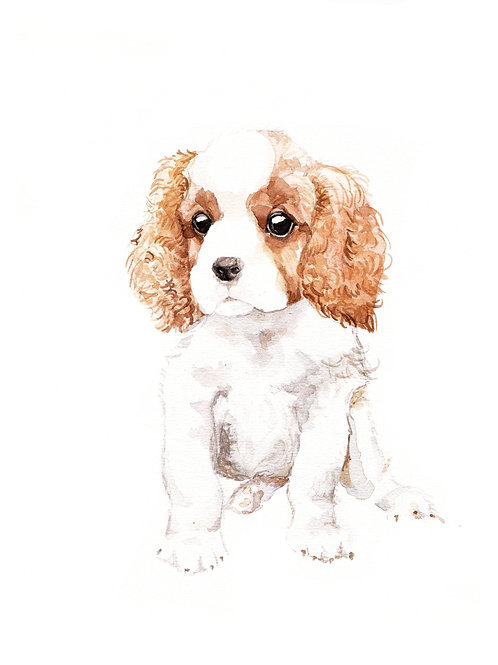 Cavalier King Charles Spaniels - choose from 4 images! Ltd Ed Print Watercolor