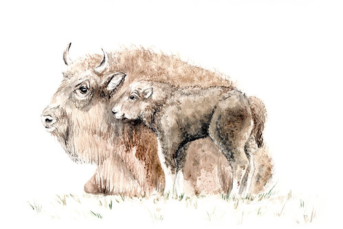 Mama and Baby Buffalo Bison Limited Edition Print 8.5x11 Watercolor