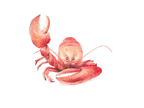 Lobster Crustacean Under the Sea Limited Edition Print 8.5x11 Nautical Be