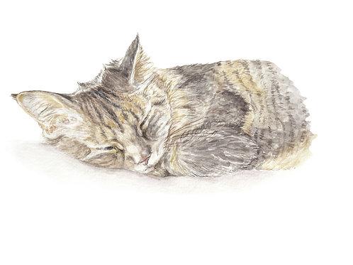 Sleepy Cat Ltd Ed Print Watercolor