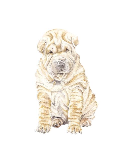 Sharpei Puppy Ltd Ed Print Watercolor Print