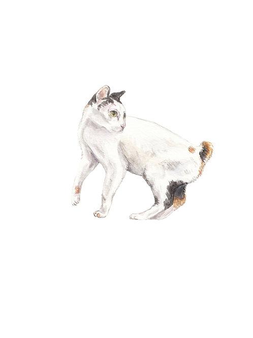 Bobtail Cat Looking Up Watercolor Art Print
