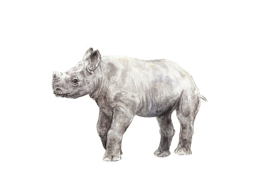 Rhino Limited Edition Print 8.5x11 Watercolor Cute Baby Animal Painting