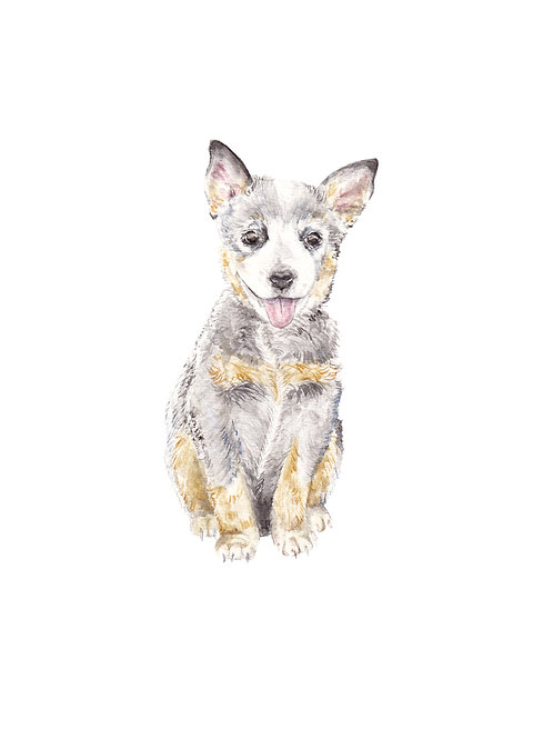 Queensland Cattle Dog Limited Edition Print Watercolor