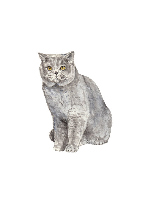 British Shorthair Cat Limited Edition Watercolor Art Print
