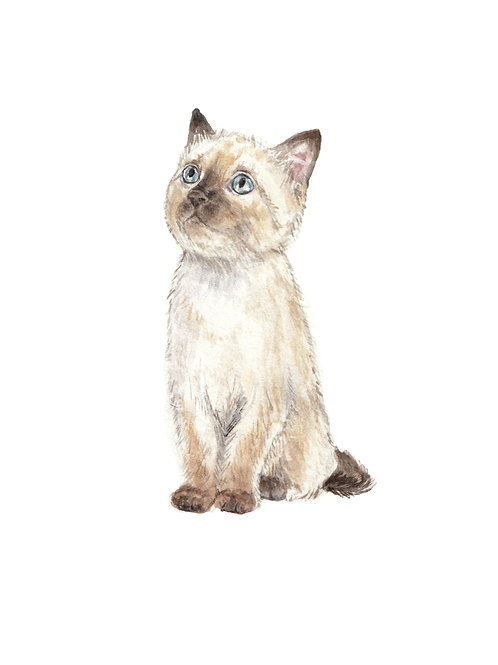 Siamese Kitten Ltd Ed Watercolor Art Print -choose from 2 images!