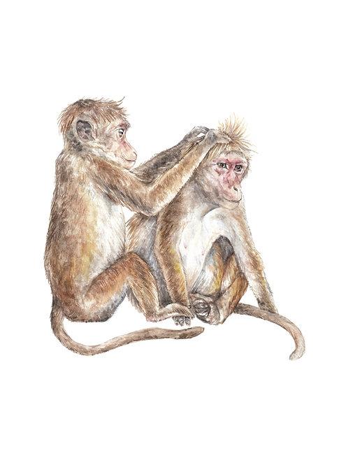 Cute Grooming Monkeys Ltd Edition Print 8.5x11