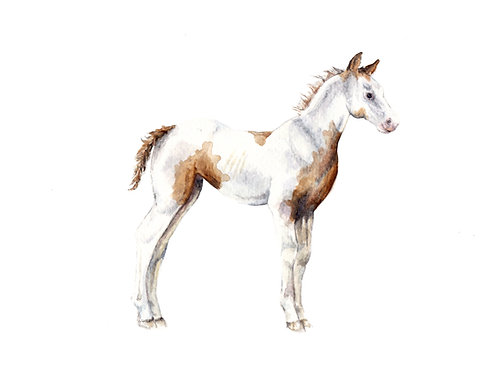 Paint Horse Limited Edition Print 8.5x11 Watercolor: Choose from 3 options