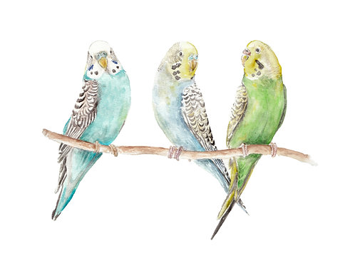 Parakeets Watercolor Limited Edition Print 8.5x11 Bird Painting Turquoise Yellow