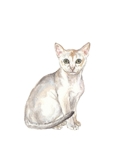 Singapura Cat Limited Edition Watercolor Art Print
