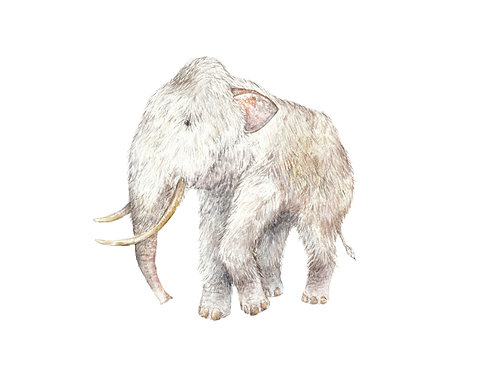 Woolly Mammoth Prehistoric Ltd Edition Print 8.5x11 Watercolor