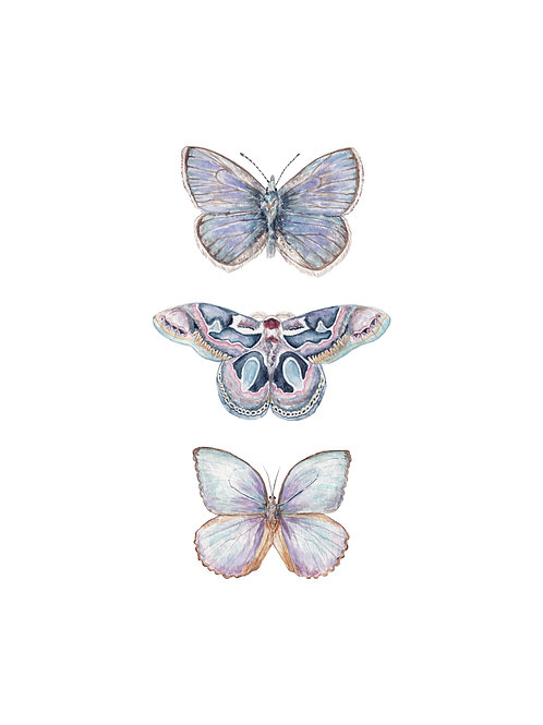 Butterflies Watercolors: Limited edition print you choose from 7 images!