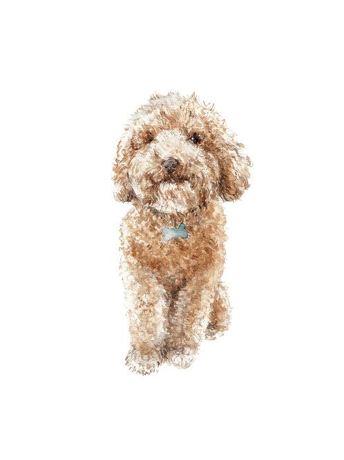 Smiling Apricot Poodle Ltd Edition Print Watercolor
