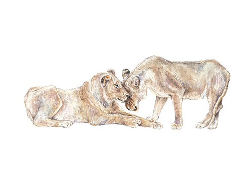Lion Mama and Baby Limited Edition Print 8.5x11 Watercolor: choose from 2 images