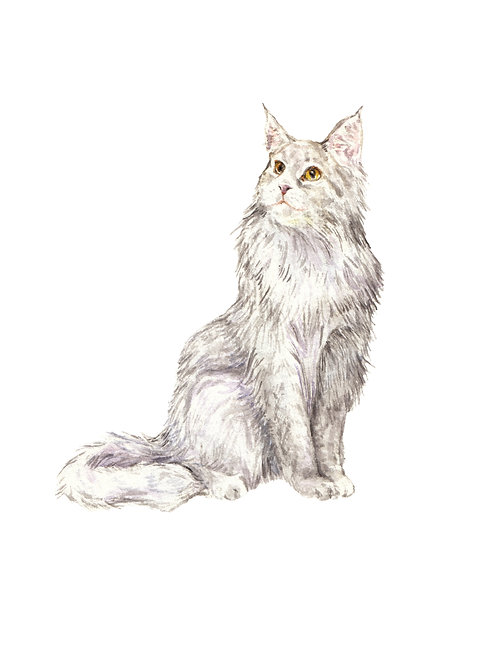 Maine Coon Cat Ltd Ed Print Watercolor