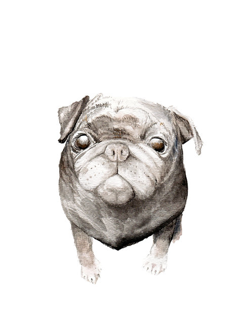 Black Pug - choose from 2 images- Ltd Ed Print Watercolor
