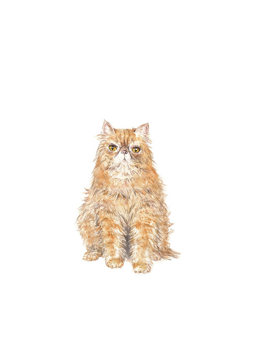 Persian Cat Watercolor Art Print