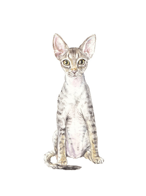 Rex Cats Ltd Ed Watercolor Art Print -choose from 2 images!