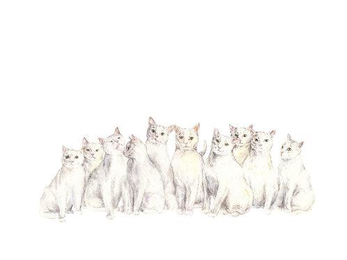 White Cats Ltd Ed Watercolor Art Print -choose from 2 i