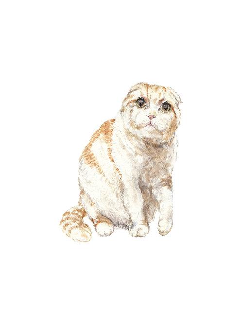 Scottish Fold Cat Ltd. Edition Watercolor Art Print