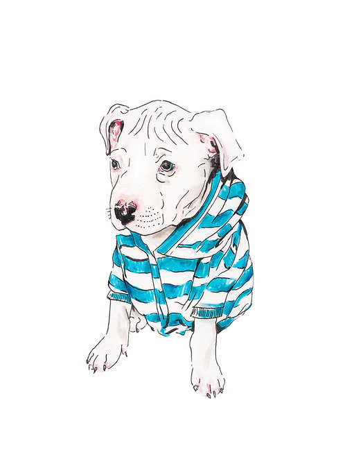 Pit Bull in a Sweatshirt Ltd Ed Print Watercolor