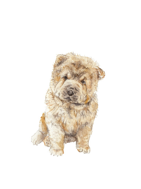 Chow Chow Dog Limited Edition Print Watercolor