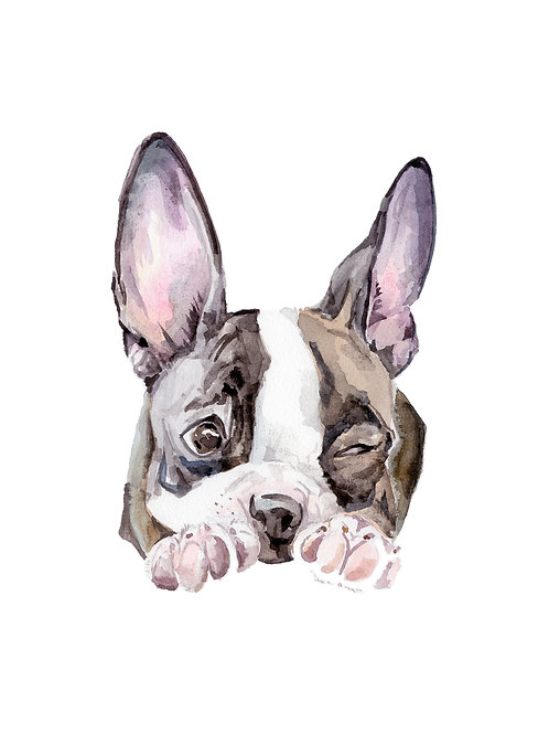 Boston Terrier Limited Edition Print Watercolor Choose from 4 Images