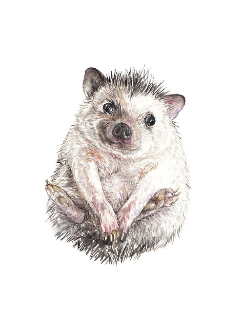 Hedgehog in a Ball Limited Edition Print 8.5x11 Watercolor