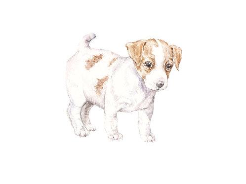 Jack Russell Ltd Ed Print Watercolor
