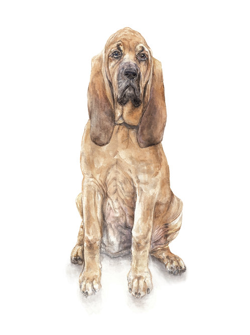 Bloodhound Dog Limited Edition Print Watercolor