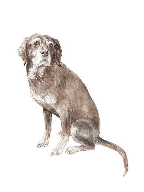 Chocolate lab - choose from 2 images- Ltd Ed Print Watercolor