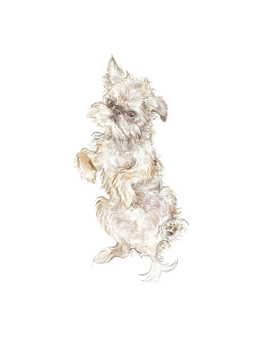 Brussels Griffon Limited Edition Print Watercolor Choose from 2 Images