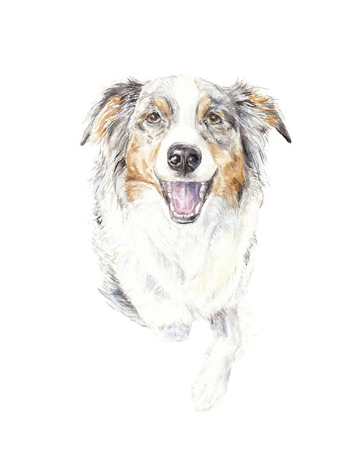 Australian Shepherd Limited Edition Print Watercolor Choose from 3 Images