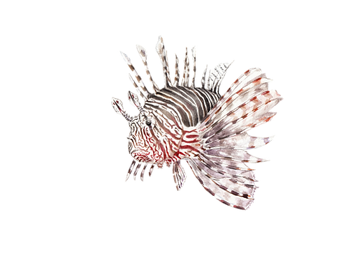 Lionfish Limited Edition Print 8.5x11 Watercolor