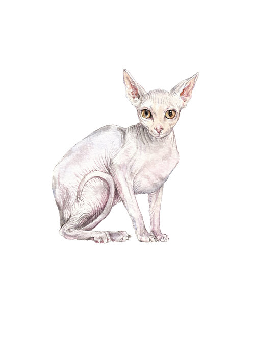 Sphynx Cat Limited Edition Watercolor Art Print