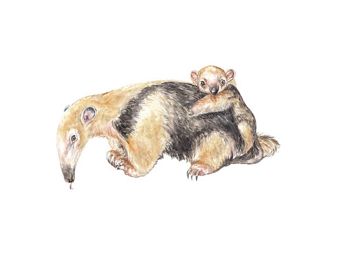 Anteater Mama and Baby Limited Edition Print 8.5x11 Watercolor