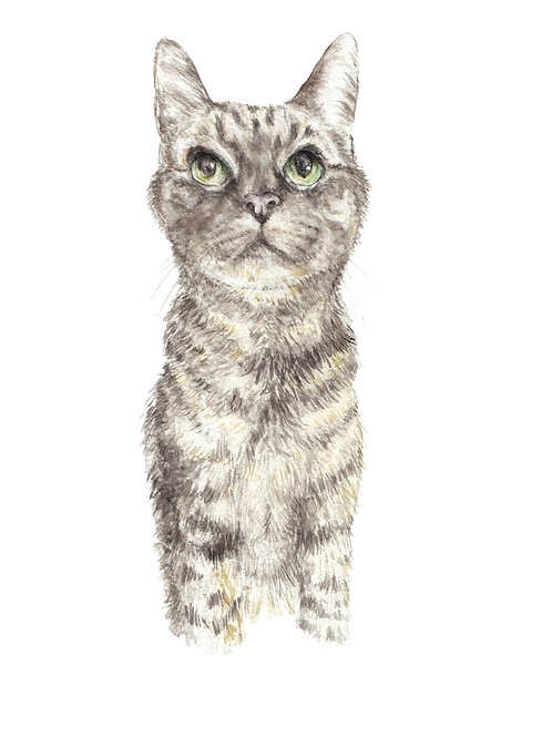 Tabby Cat Looking Up Watercolor Art Print