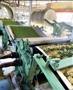 Tea Factory.jpg