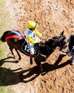 Kinesio Taping Racehorses