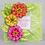 Thumbnail: Sello Small Garden Zinnia