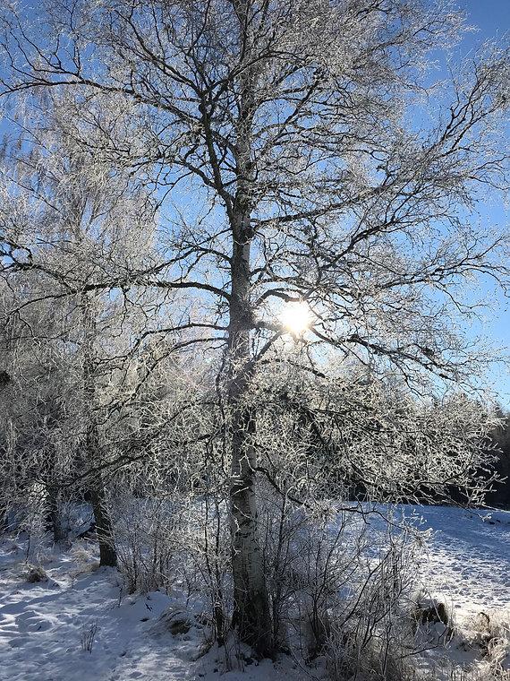 vinter.jpg