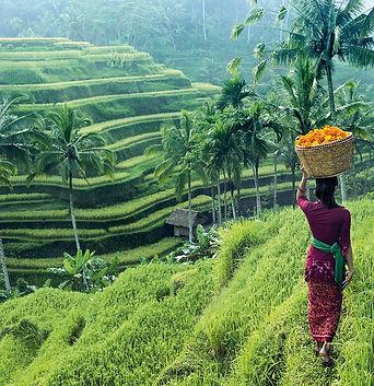 indonesia 5.jpg