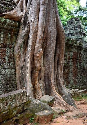 Siem-Reap-Cambodia-Templo-Budista-com-Tr
