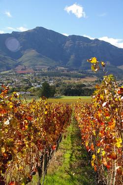 Stellenbosch-África do Sul