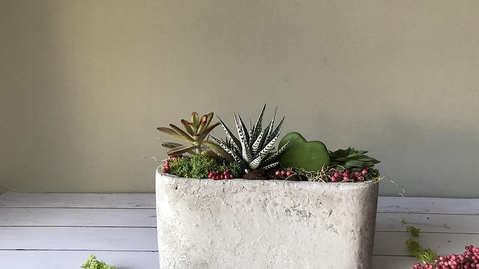 CONCRET succulent