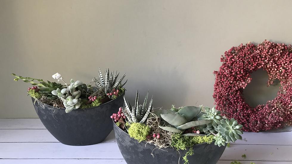 DARK succulent