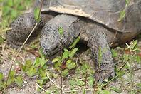 Tenacity - Tortoise.JPG