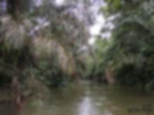 Caño Negro Landscapes