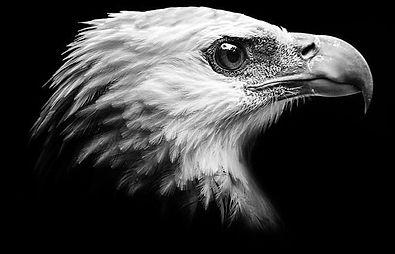 águia.jpg
