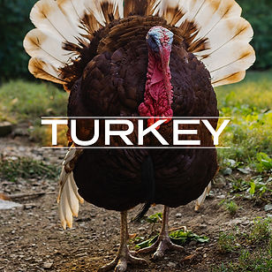 Turkey_button_v2.jpg